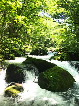 苔の森 奥入瀬渓流の風景