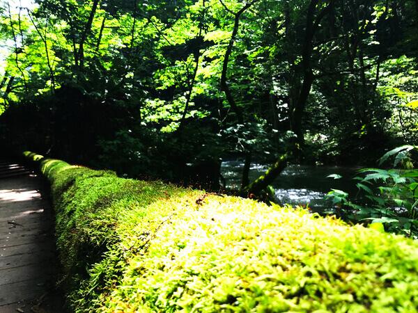 苔の森 奥入瀬渓流の苔むした橋